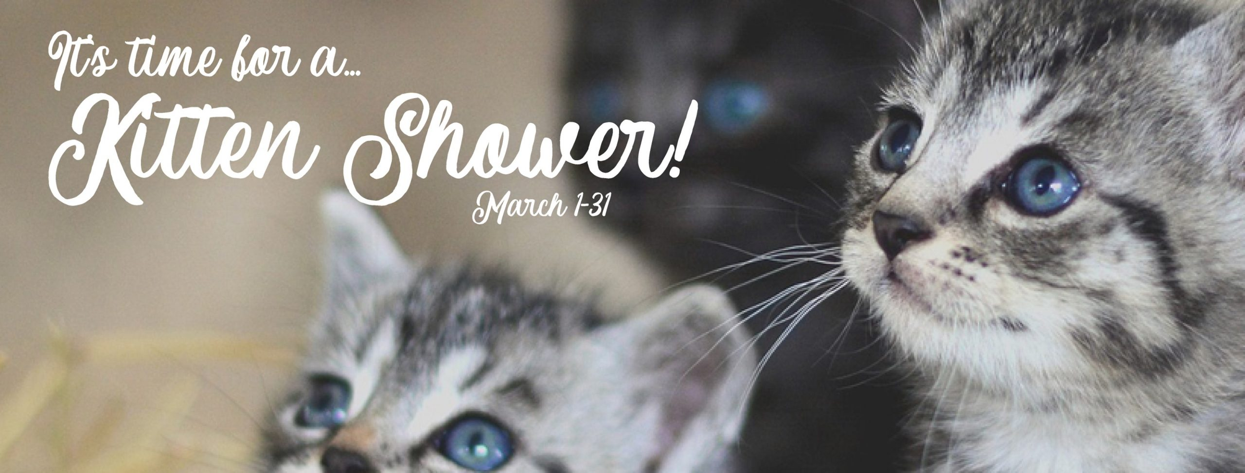 Read more about the article Virtual Kitten Shower